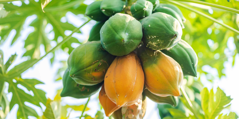 Papayacare