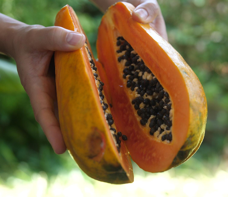 Our Papaya